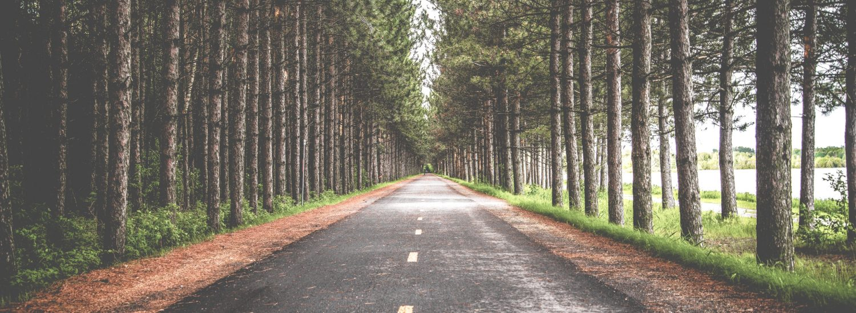 Lang vej mellem træer